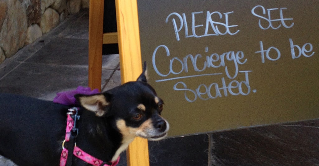 Dog friendly wineries Simply Driven
