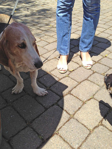 Dog friendly wineries Sonoma Valley Simply Driven