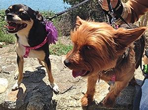 Dog Friendly Wineries Chapter 2 Sonoma Valley Gundlach Bundschu Simply Driven