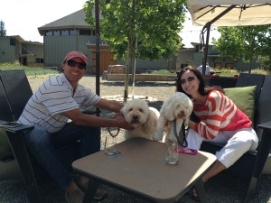 Paradox dog friendly wineries dogs Simply Driven