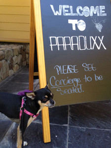 Paraduxx dog friendly wineries Lola Simply Driven